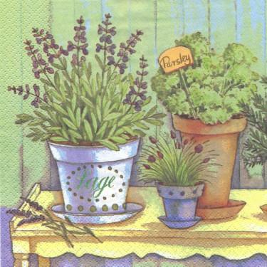 Dekorszalvéta - Fűszernövények 5