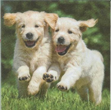 Dekorszalvéta - Happy Puppies
