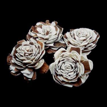 Termés Rózsafej drapp 4 db/cs