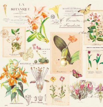 Dekorszalvéta - Botanique