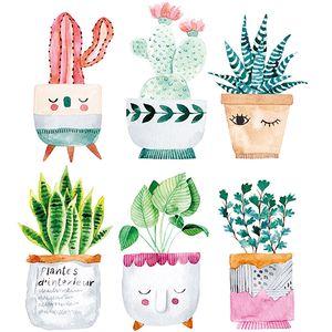 Dekorszalvéta - Plantes d'interiur