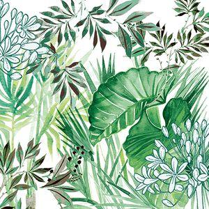 Dekorszalvéta - Tropical Plants