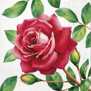 Dekorszalvéta - Special Rose