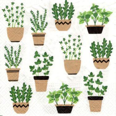 Dekorszalvéta - Herbs in Pot